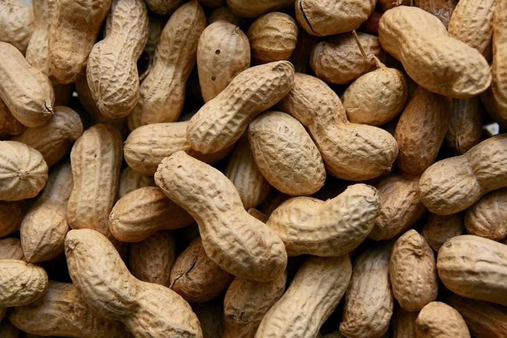 ಕಡಲೆಕಾಯಿಯ ಪ್ರಯೋಜನಗಳು - Peanut Benefits in Kannada