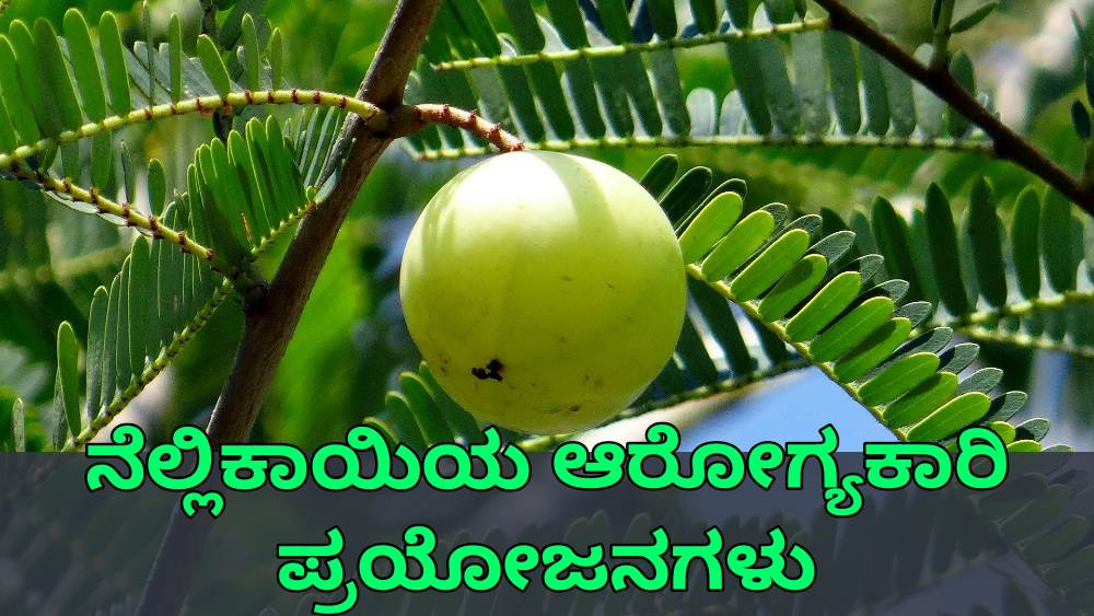 ನೆಲ್ಲಿಕಾಯಿ ಪ್ರಯೋಜನಗಳು - Amla Benefits in Kannada